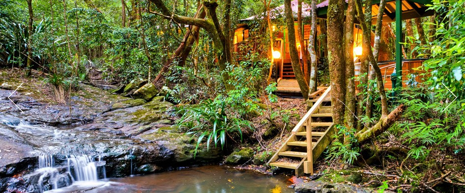 The Mouses House - Rainforest Retreat - Accommodation Resorts