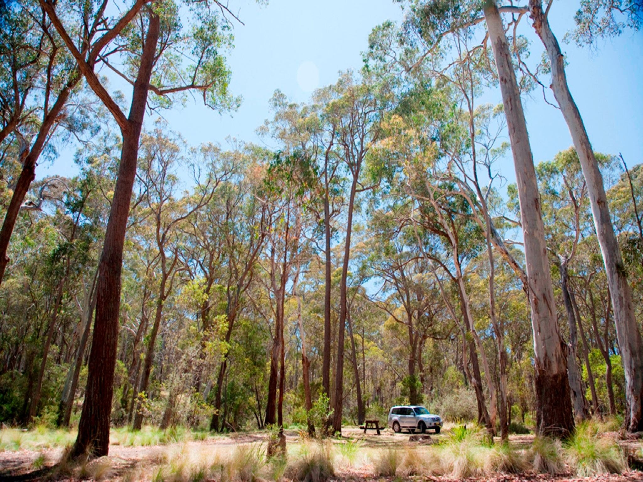 Coolah Tops National Park Camping - Accommodation Resorts