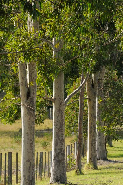 Stringybark Cottages - Accommodation Resorts