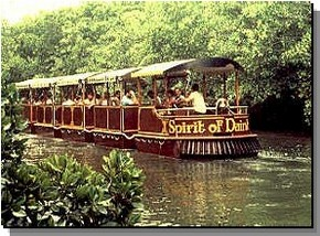 Daintree Rainforest River Trains - Accommodation Resorts