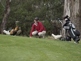 Tasmania Golf Club - The - Accommodation Resorts